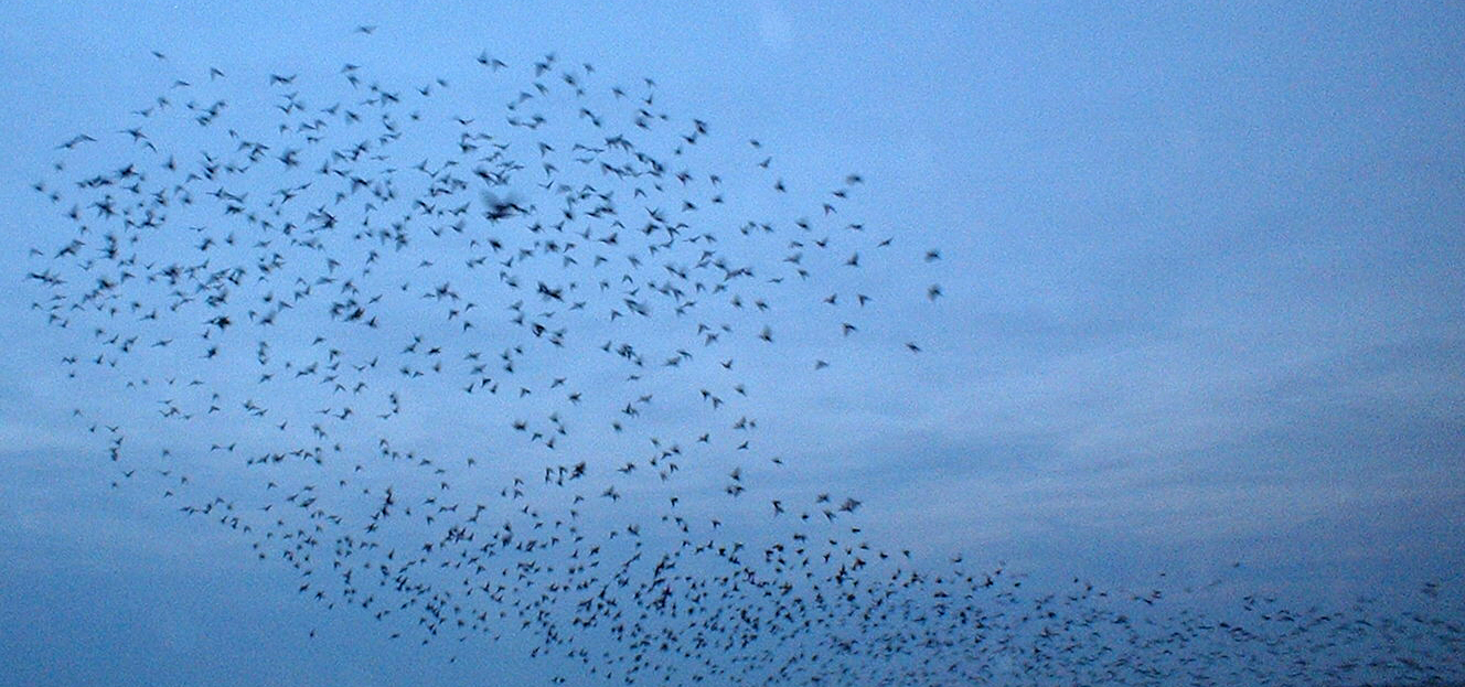 Swarm by Simon Bleasdale